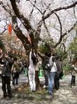 上野公園の桜を撮る人々